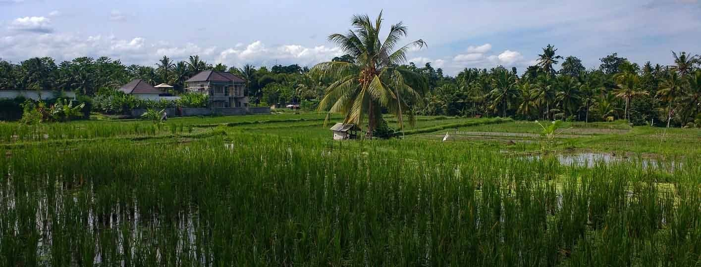 things to do in ubud bali attractions indonesia