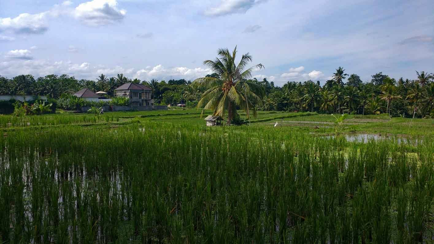 Southeast Asia Trip. Rice fields, terraces, rice fields to the west of Ubud Bali island