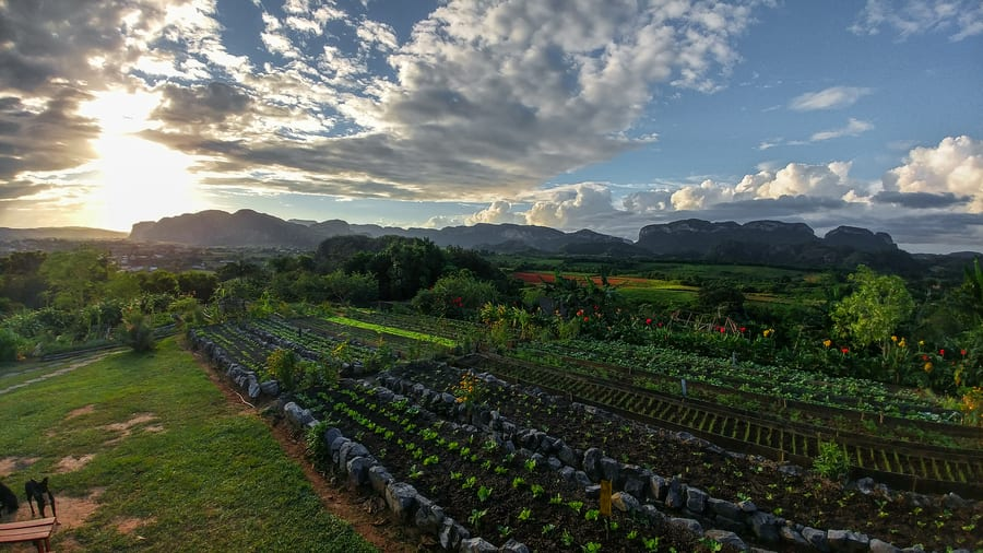 orchard of the finca agroecologica el paraiso viñales cuba in 3 days
