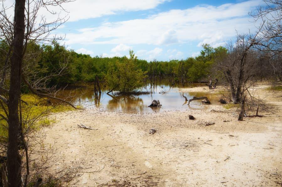 lagoon to go to the hidden beach in cayo jutias cuba