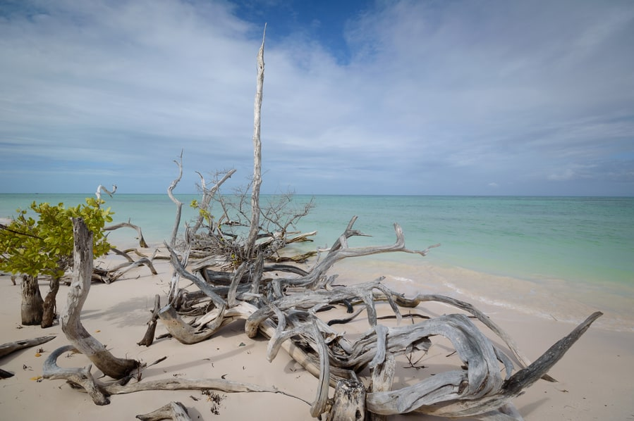 the most beautiful beach in cuba is cayo jutias