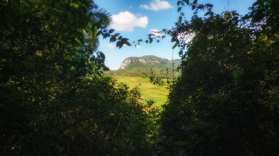 cueva de la vaca in viñales cuba is a must