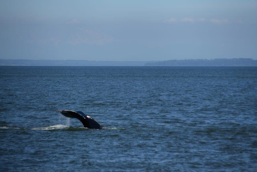 kayak orcas canada