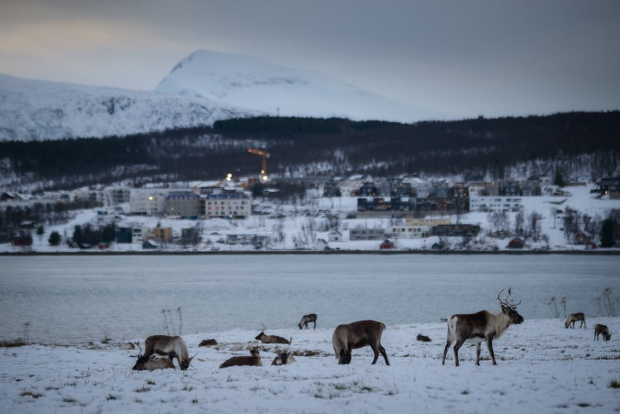 Reindeer Sledding, something to do in Tromso