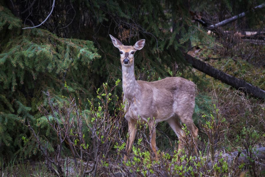 animal spotting canadian rockies photo tour