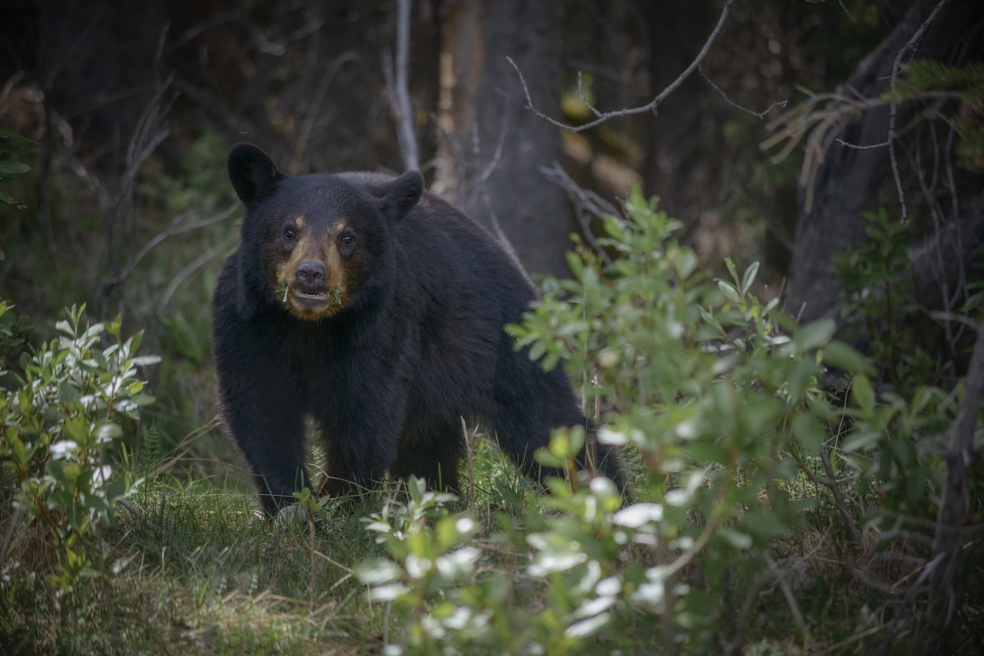 tip to survive a black bear attack in yosemite