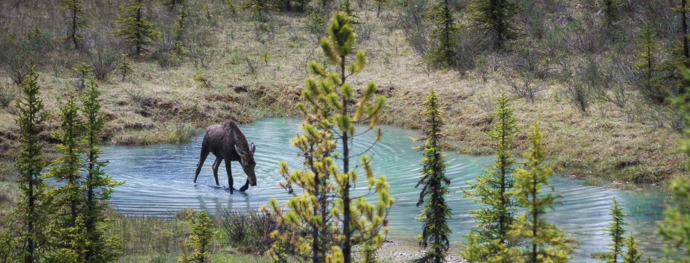 best places to see wildlife in the canadian rockies