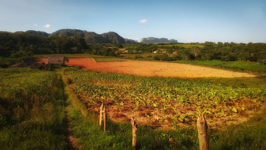 coffe and tobacco crops viñales cuba