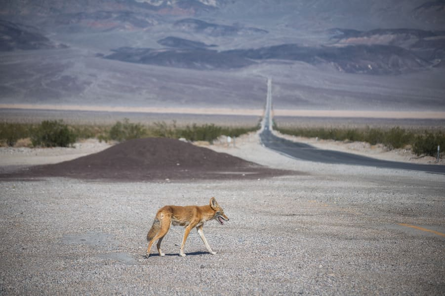 death valley road selfdriving tour