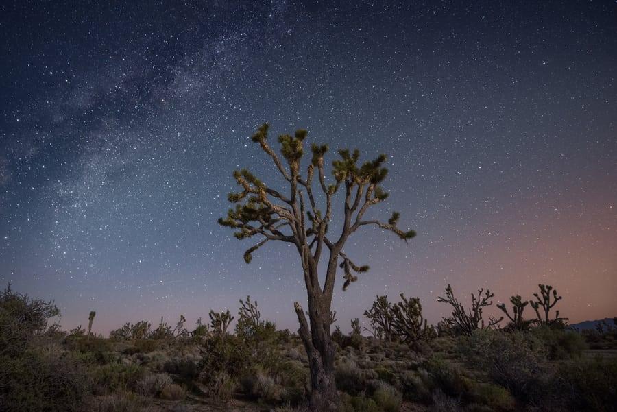 que ver en Mojave National Preserve