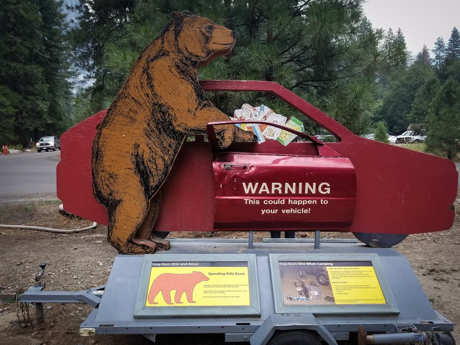 bear attacks in yosemite national park how to avoid them