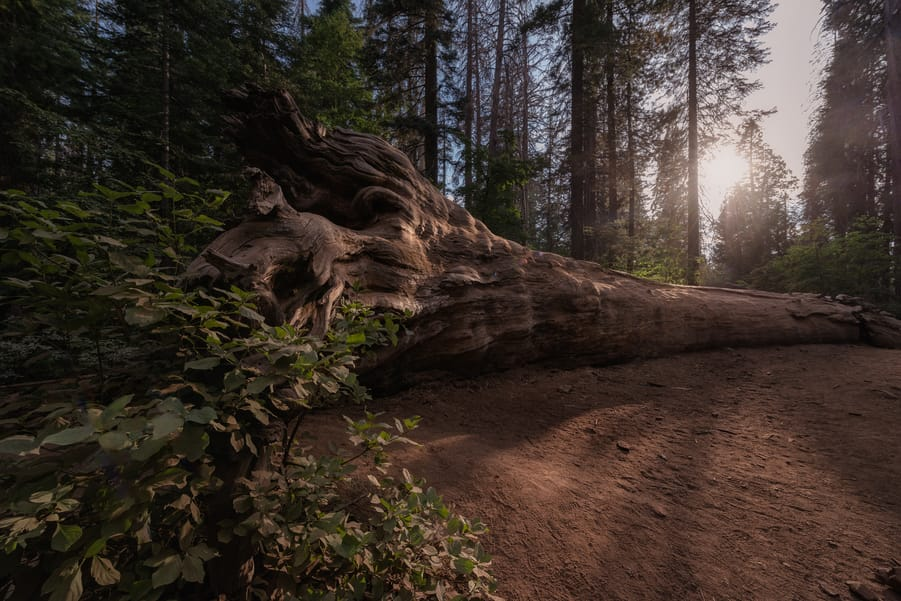 what to see in yosemite mariposa grove california