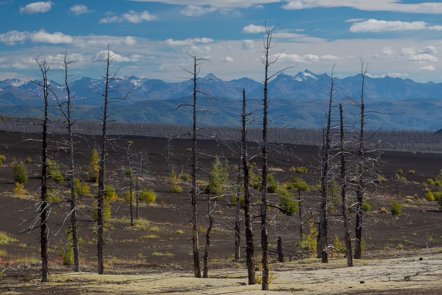death forest landscape in kamchatka photo tour