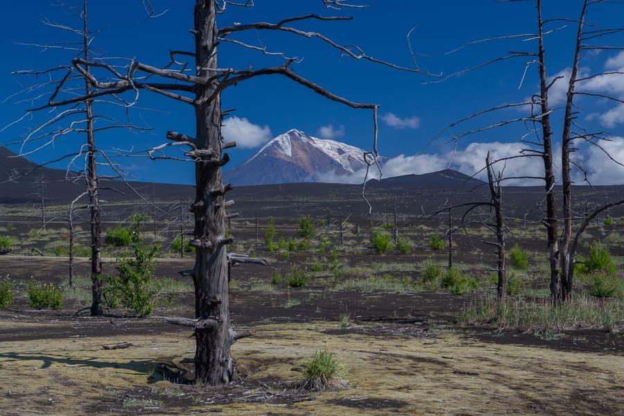 volcanes de kamchatka arboles muertos erupcion viaje