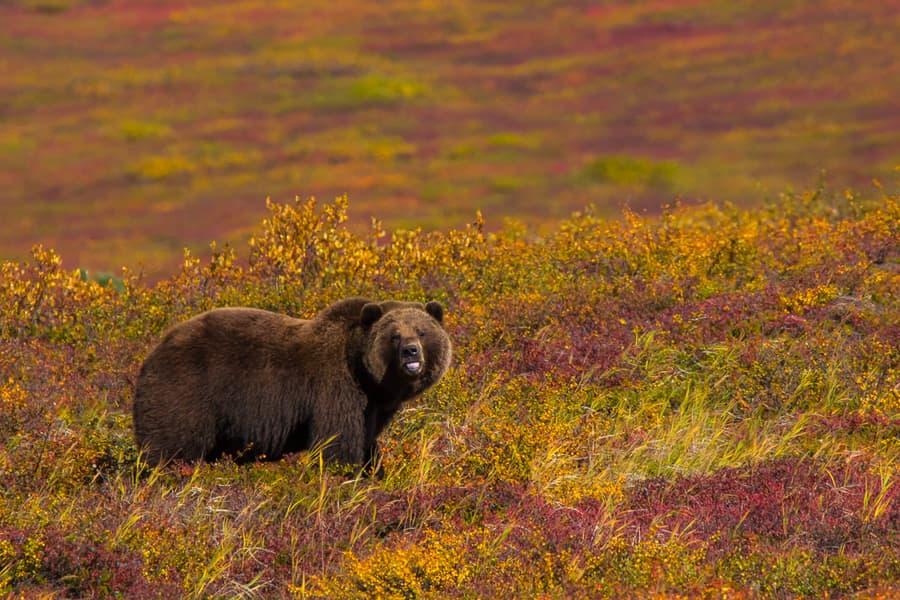 osos en kamchatka animales viaje fotografico