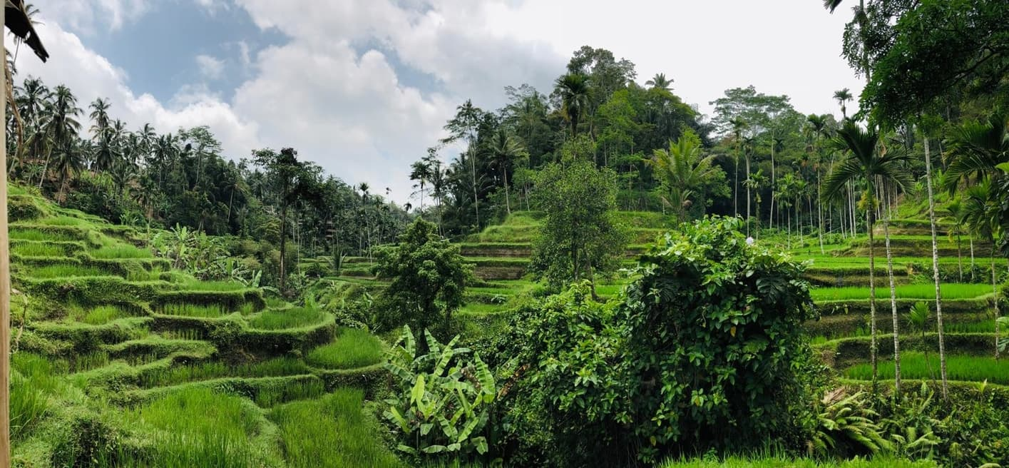 best rice fields to visit in Bali in 7 days tegalalang