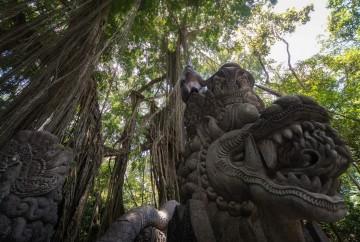 que hacer en bali en 10 días mejores excursiones y tours en bali Monos en Monkey Forest en el bosque sagrado de los monos de Ubud