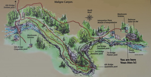 mapa de maligne canyon. guia completa de jasper national park