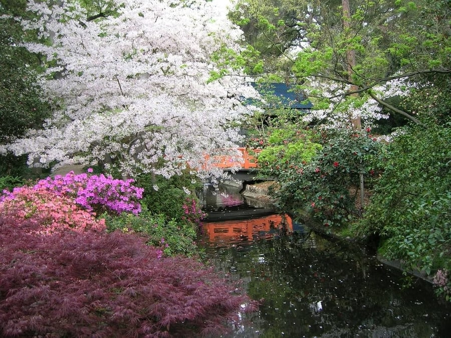 Descanso Garden, a Japanese garden to visit in Los Angeles