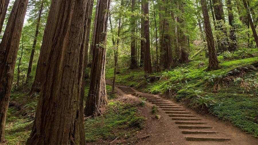 Muir Woods National Monument, a place to go in San Francisco