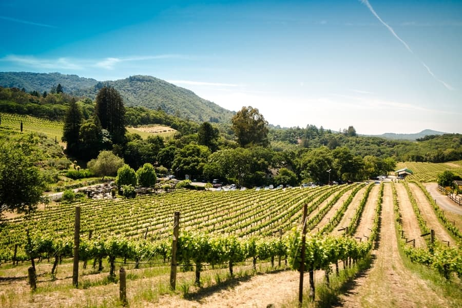 Napa and Sonoma, the places to do wine tastings in San Francisco
