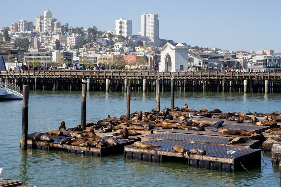 Pier 39, a place to visit in San Francisco to see sea lions