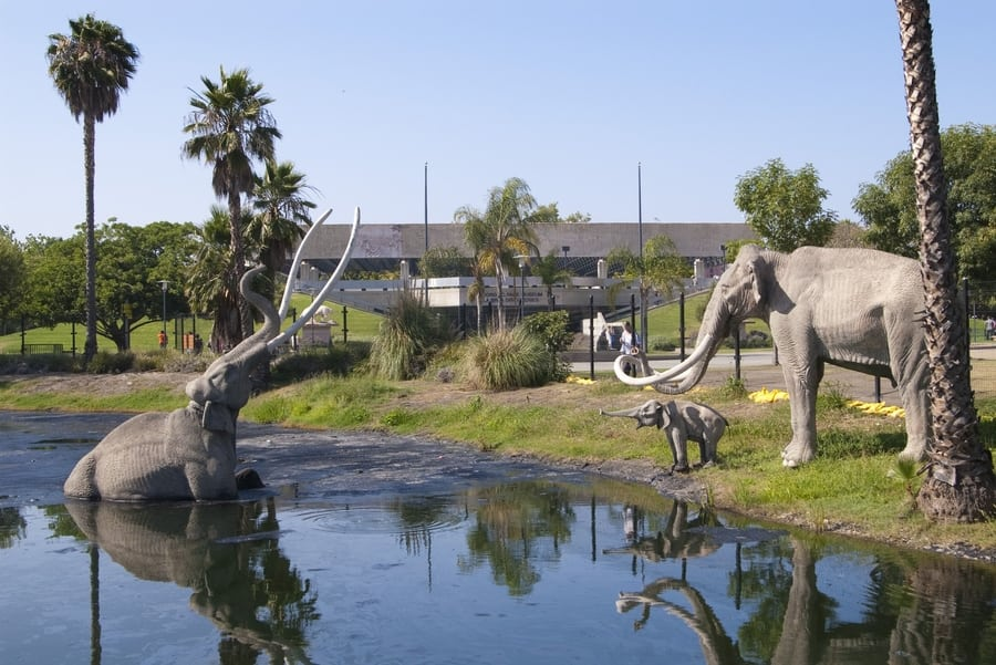 The La Brea Tar Pits and Museum, another museum to visit in LA