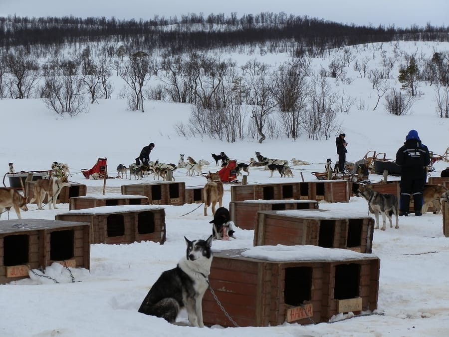Dog Sledding, something popular to do in Tromso, Norway