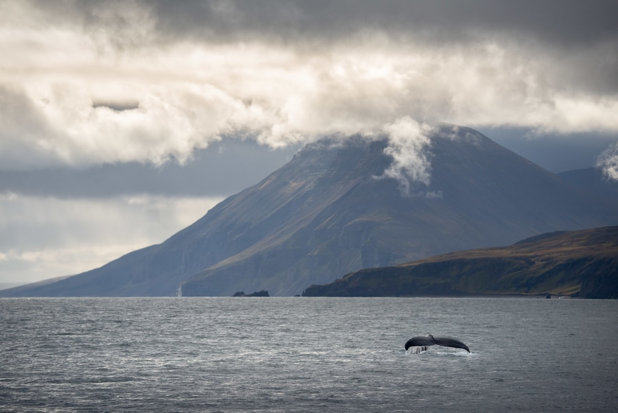 Iceland whale watching tour