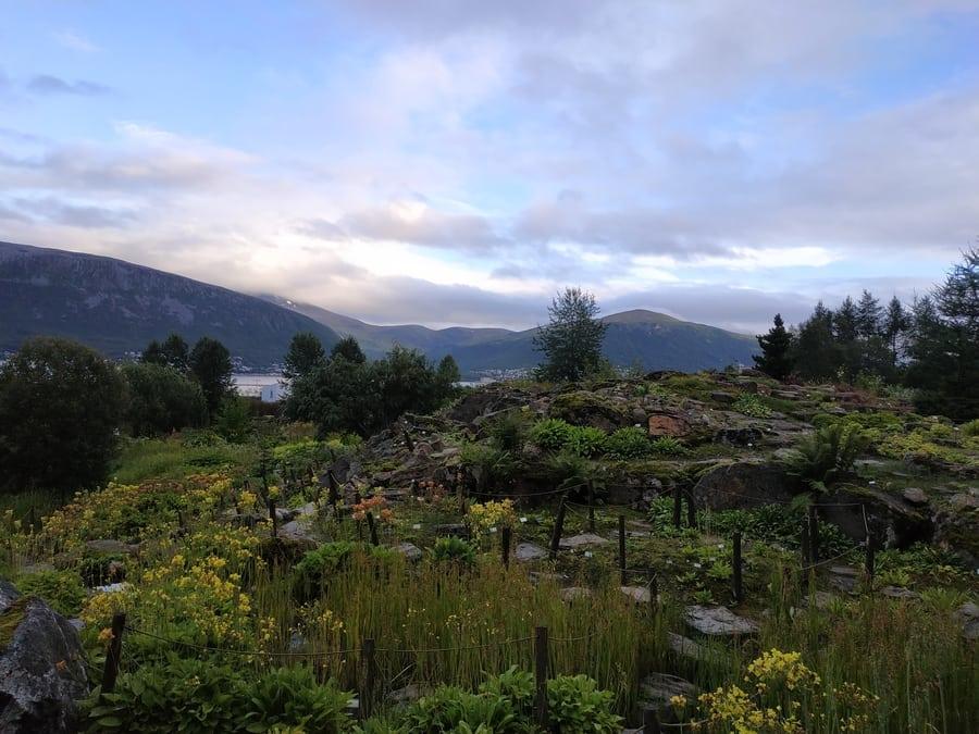 Jardín Botánico Ártico-Alpino de Tromsø, algo que ver en Tromso