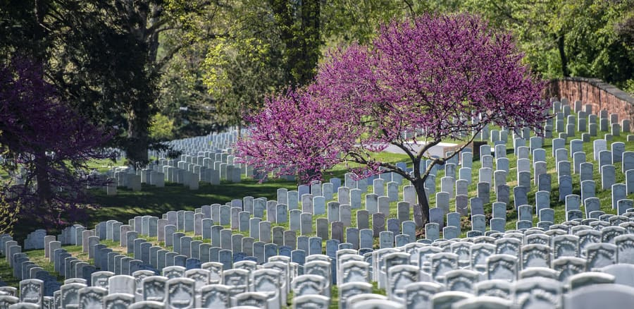 Visit the Arlington National Cemetery, things to do in Washington DC