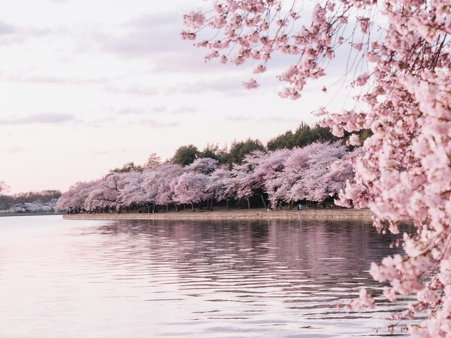 Tidal Basin, things to do in D.C.