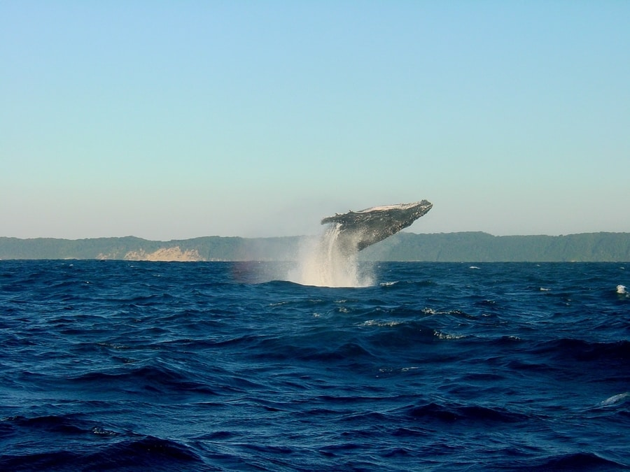 Golden Circle and whale watching tour