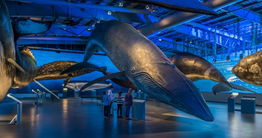 Whales of Iceland, un museo que visitar en Reikiavik en familia