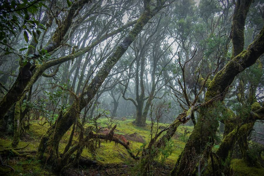 Most beautiful canary island for its laurel forests
