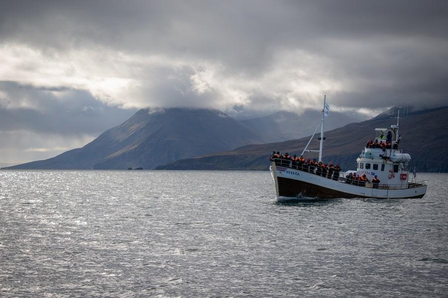 Mejor momento para ver cetáceos en Islandia