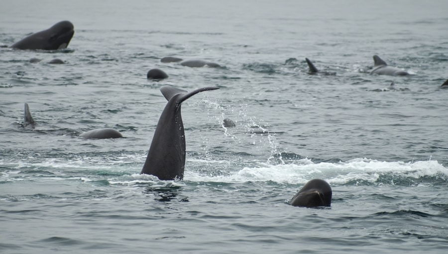 What kind of whales do you see in Iceland