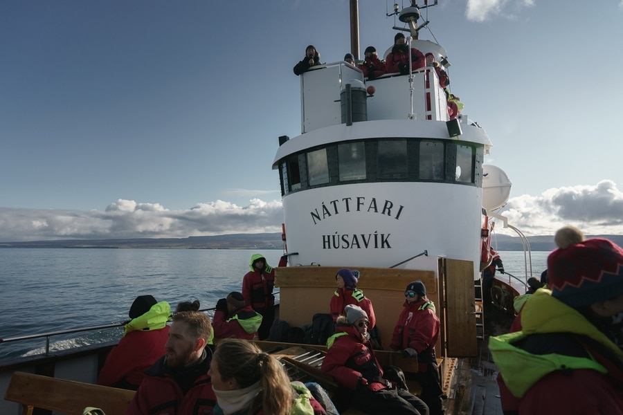 Whale watching east Iceland