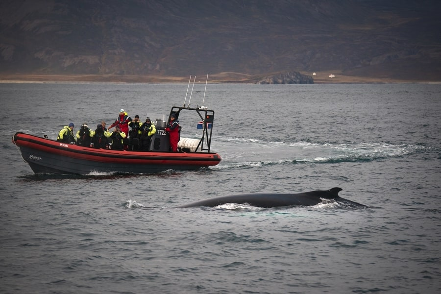 Iceland whale watching winter
