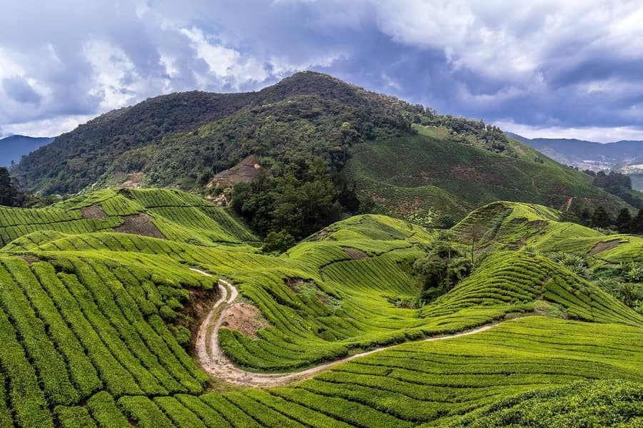 Cameron Highlands, Kuala Lumpur places to visit