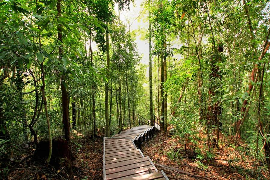 Parque Nacional Taman Negara, Kuala Lumpur, Malasia