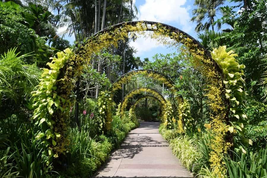 Singapore Botanic Gardens, things to see Singapore
