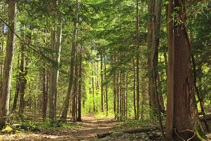 28. Jenny Jump State Forest, a relaxing place to go in New Jersey