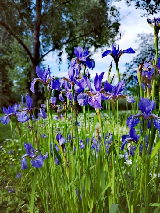 19. Presby Memorial Iris Gardens, the best thing in New Jersey for couples
