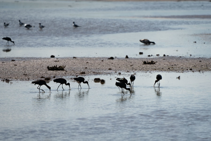 13. Edwin B. Forsythe National Wildlife Refuge, one of the nicest views over New Jersey