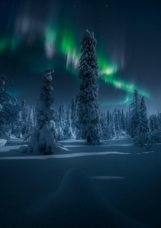 Bosque de Ruka y Aurora Boreal, Finlandia
