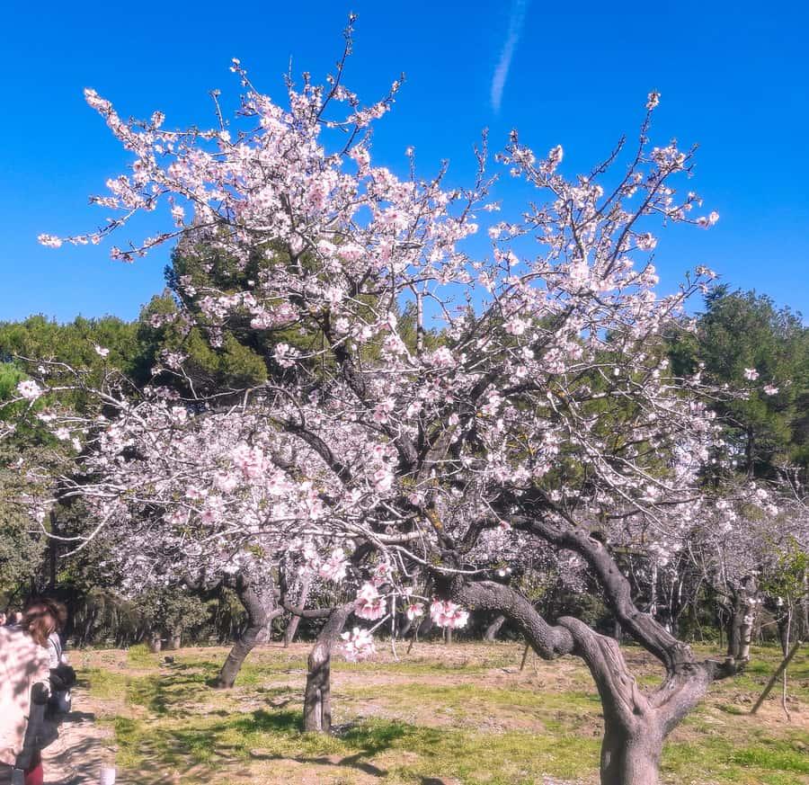 Parque Quinta de los Molinos, que ver en Madrid