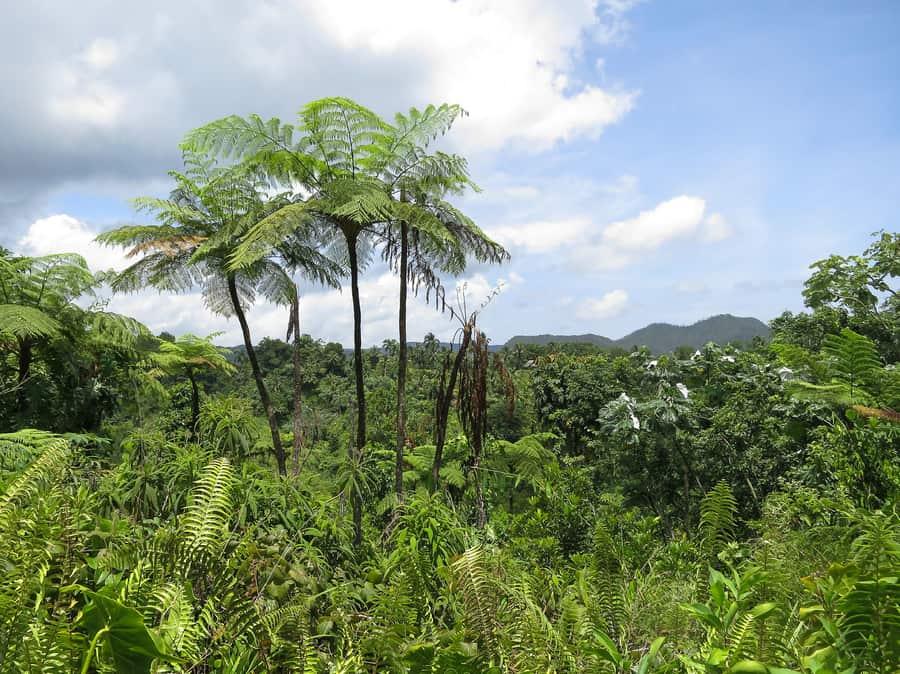 Alejandro de Humboldt National Park, attraction in Cuba