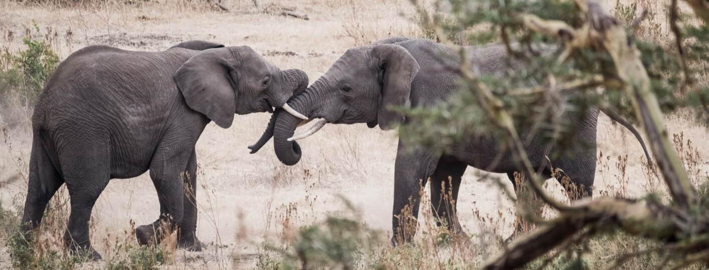Se puede viajar a Tanzania y restricciones de viaje a Tanzania