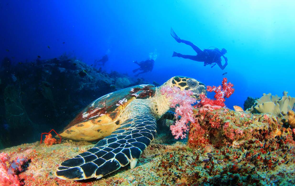 turtles and other animals to see in bali diving and snorkeling